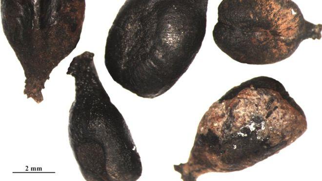 Expectativas de la uva: El ADN revela la historia del vino añejo
