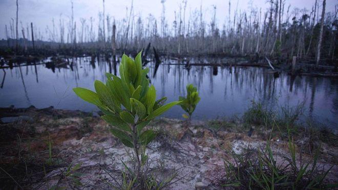 Extinción de plantas: malas noticias para todas las especies.